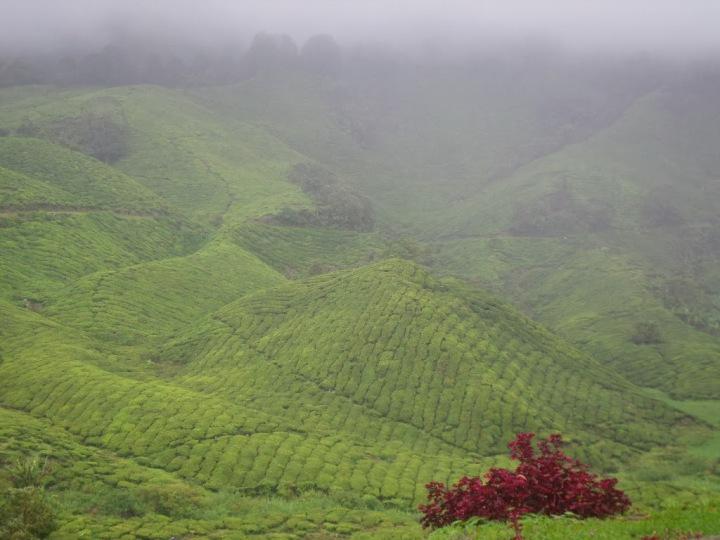 Cameron Highlands Malesia: cosa fare, dovedormire